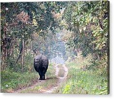 One Horned Rhino Walking Down The Road Acrylic Print