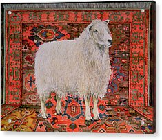 One Hundred Percent Wool Acrylic Print by Ditz