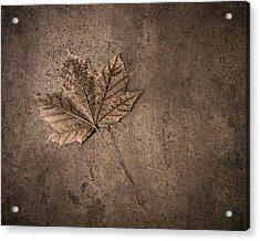 One Leaf December 1st  Acrylic Print