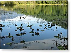 One Mile Lake Reflections 1 Acrylic Print by Walter Fahmy