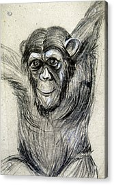 One Of A Kind Original Chimpanzee Monkey Drawing Study Made In Charcoal Acrylic Print by Marian Voicu
