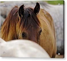 One Of Many Acrylic Print by Ron  McGinnis