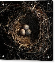 One Of The Most Private Things In The World Is An Egg Until It Is Broken Mfk Fisher Acrylic Print by Mark Fuller