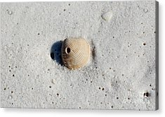 One Orange Striped Sea Shell With Hole Macro On Fine Wet Sand Acrylic Print by Shawn O'Brien