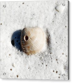 One Orange Striped Sea Shell With Hole Macro On Fine Wet Sand Square Format Diffuse Glow Digital Art Acrylic Print by Shawn O'Brien