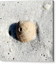 One Orange Striped Sea Shell With Hole Macro On Fine Wet Sand Square Format Watercolor Digital Art Acrylic Print by Shawn O'Brien