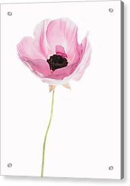 One Pink Beauty Acrylic Print by Rebecca Cozart