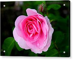 Acrylic Print featuring the photograph One Pink Rose And One Bud by JoAnn Lense