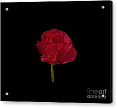 One Red Flower Tee Shirt Acrylic Print