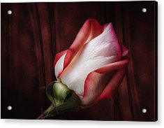 One Red Rose Still Life Acrylic Print by Tom Mc Nemar