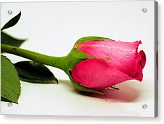 One Single Rose Acrylic Print