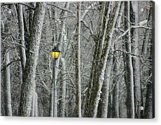 Acrylic Print featuring the photograph One Strange Tree 1 by David Dunham