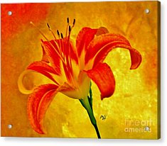 Acrylic Print featuring the photograph One Tigerlily by Marsha Heiken