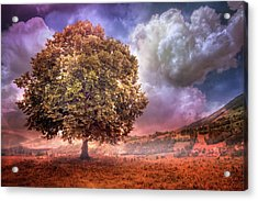 Acrylic Print featuring the photograph One Tree In The Meadow by Debra and Dave Vanderlaan