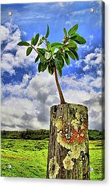 Acrylic Print featuring the photograph One Tree One Post by DJ Florek