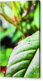 One Waterdrop Acrylic Print by Cesar Vieira