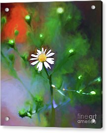 Acrylic Print featuring the photograph One White Flower by Kerri Farley