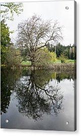 Tree Reflections Acrylic Print by Marilyn Wilson