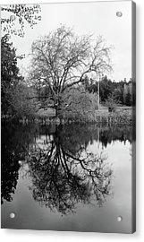 Tree Reflections - Bw Acrylic Print by Marilyn Wilson