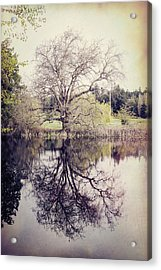 Tree Reflections - Textured Acrylic Print by Marilyn Wilson