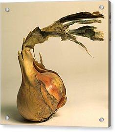Onion Acrylic Print by Bernard Jaubert