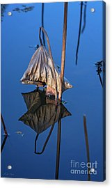 Acrylic Print featuring the photograph Only In Still Water by Linda Lees