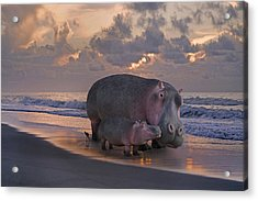 Only On Topsail The Best Kept Secret Acrylic Print