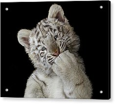 Oops! Did I Scare You? Acrylic Print by Pedro Jarque Krebs