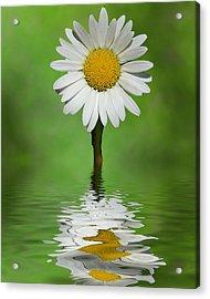 Oops Za Daisy Acrylic Print by Rick Friedle