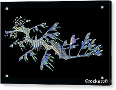 Opalised Sea Dragon Acrylic Print