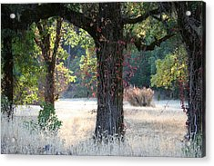 Open Arms Acrylic Print by Holly Ethan