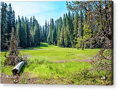 Open Meadow- Acrylic Print