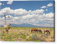 Open Range Wild Horses Grazing Acrylic Print by James BO Insogna