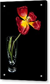 Open Red Tulip In Vase Acrylic Print