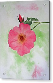Open Rose Acrylic Print