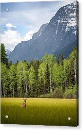 Open Spaces // Glacier National Park  Acrylic Print