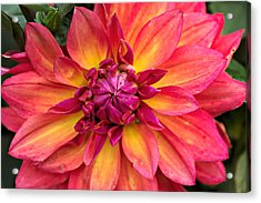 Opened To The World 4 Acrylic Print by Cendrine Marrouat