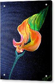 Acrylic Print featuring the painting Opening Cala Lily by Gary Smith