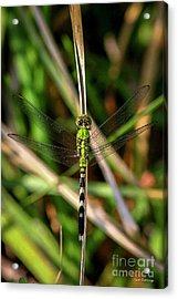 Acrylic Print featuring the photograph Openminded Green Dragonfly Art by Reid Callaway