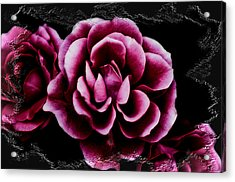Ophelia's Roses Acrylic Print by Shelly Stallings