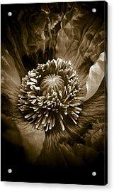 Opium Poppy Papaver Somniferum Acrylic Print by Frank Tschakert