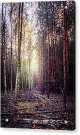 Opposition Acrylic Print by Dmytro Korol