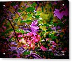 Opulent Lily Acrylic Print