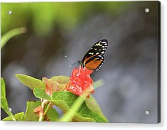 Orange And Black Butterfly Acrylic Print