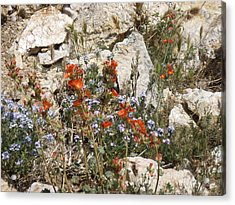 Orange And Blue Flowers Acrylic Print by Joan Taylor-Sullivant