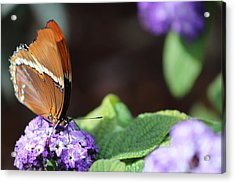 Orange And Brown Butterfly On Purple Acrylic Print