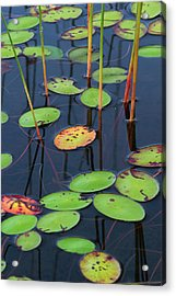 Orange And Green Water Lily Pads  Acrylic Print by Juergen Roth