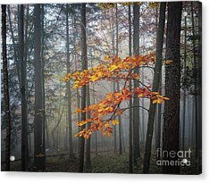 Acrylic Print featuring the photograph Orange And Grey by Elena Elisseeva