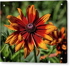 Acrylic Print featuring the photograph Orange And Red by Robert Pilkington