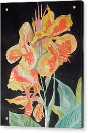 Orange And Yellow Canna Lily On Black Acrylic Print by Warren Thompson